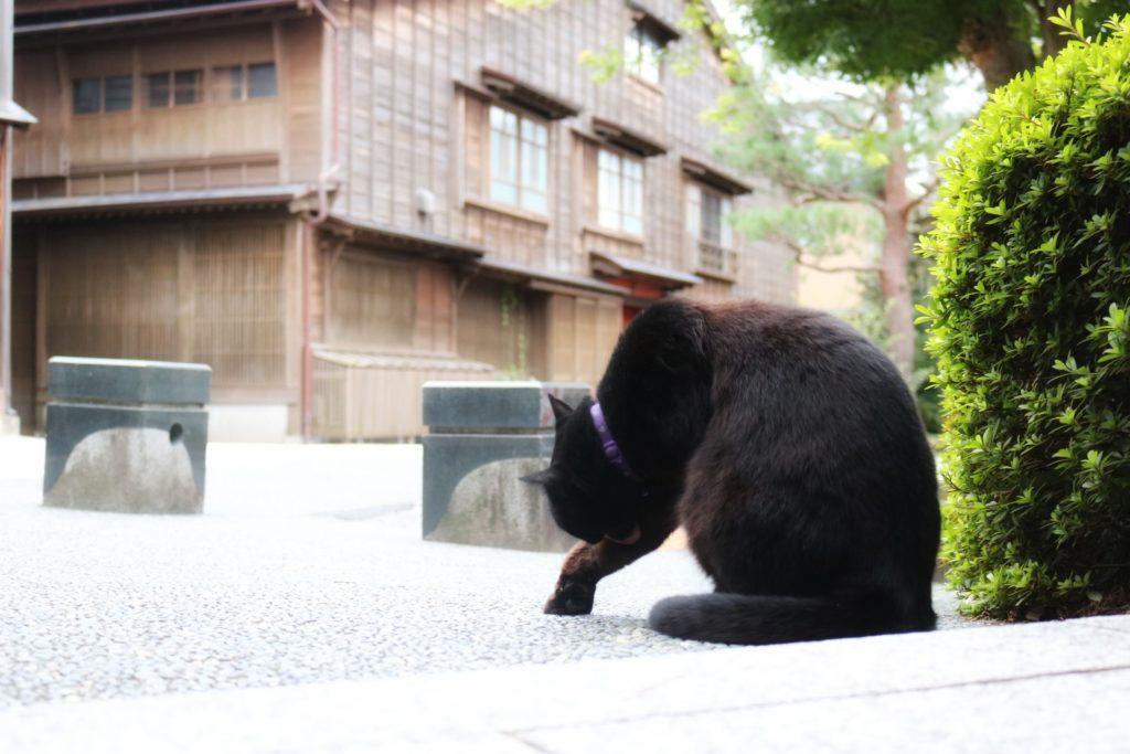 ひがし茶屋街での猫